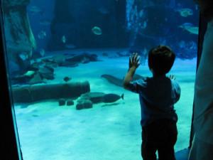 Day Out at London Aquarium