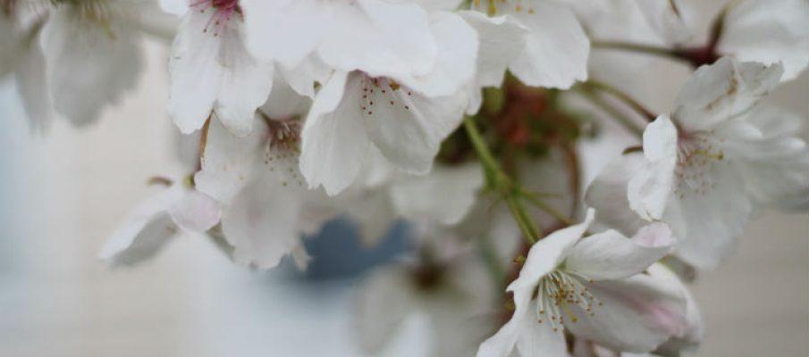 gardenparkdeanblosso