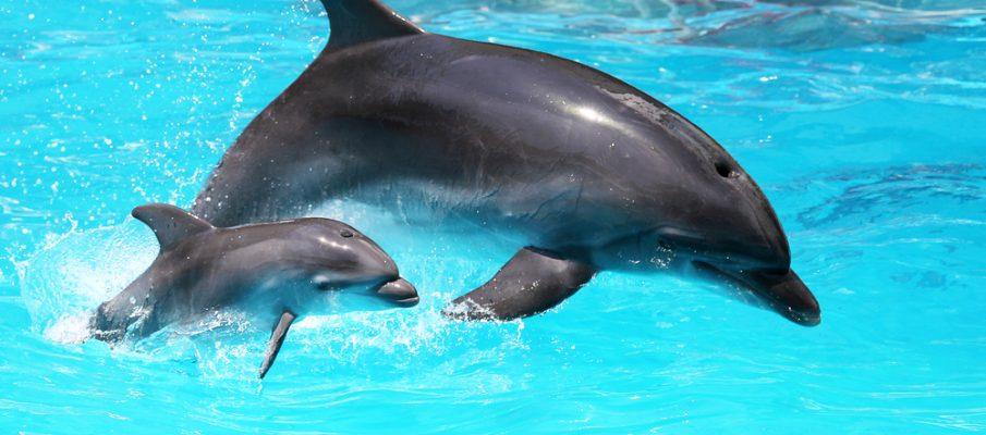 dolphinsshutterstock