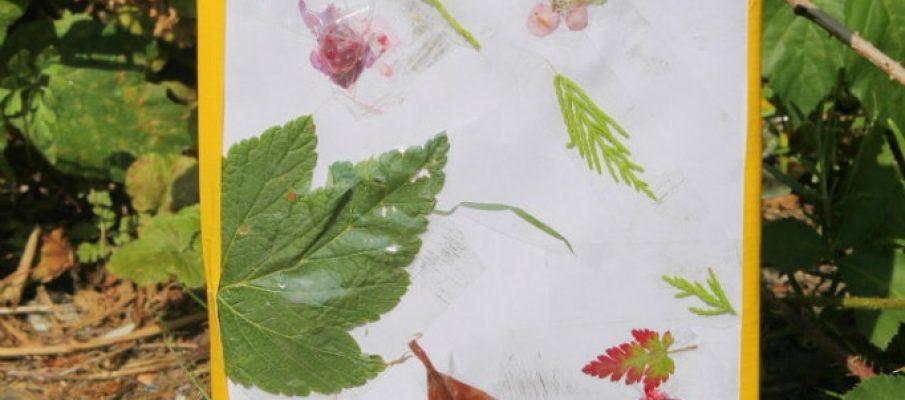 leafpic1