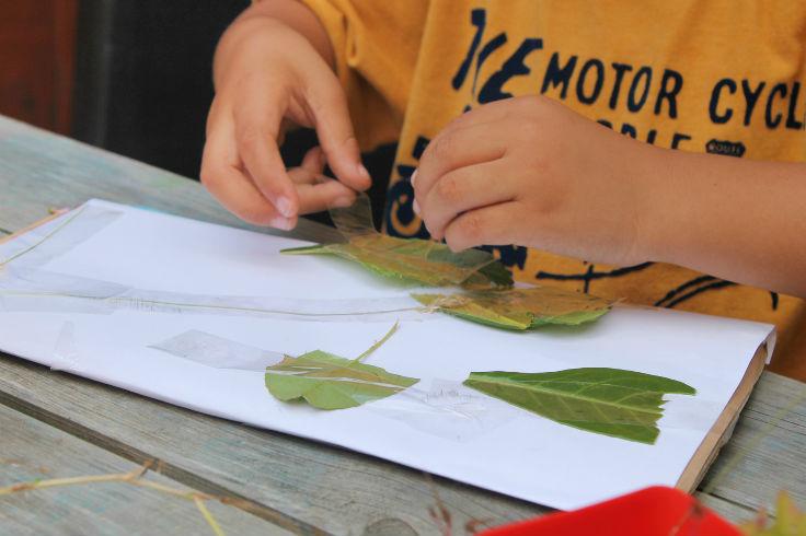 leaftaping