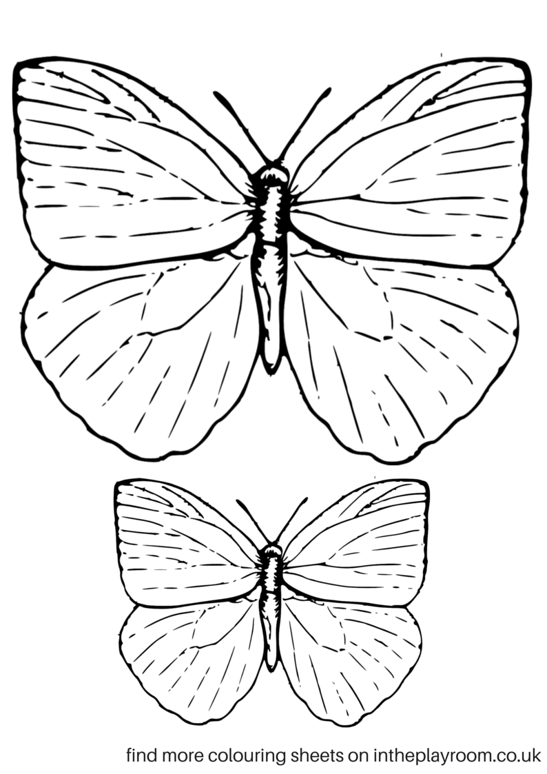 Co colouring in pages butterfly - Co Colouring In Pages Butterfly 17