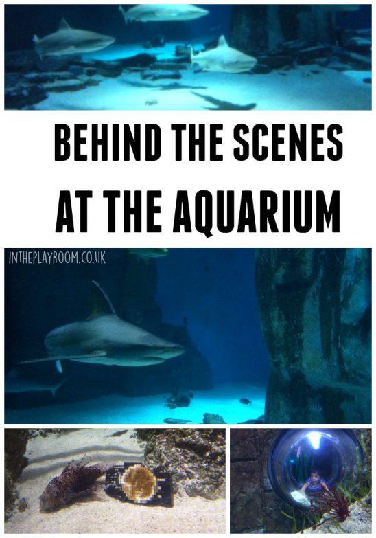 Behind the Scenes at London Aquarium