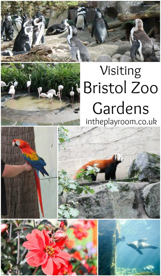 A Family day out at Bristol Zoo Gardens
