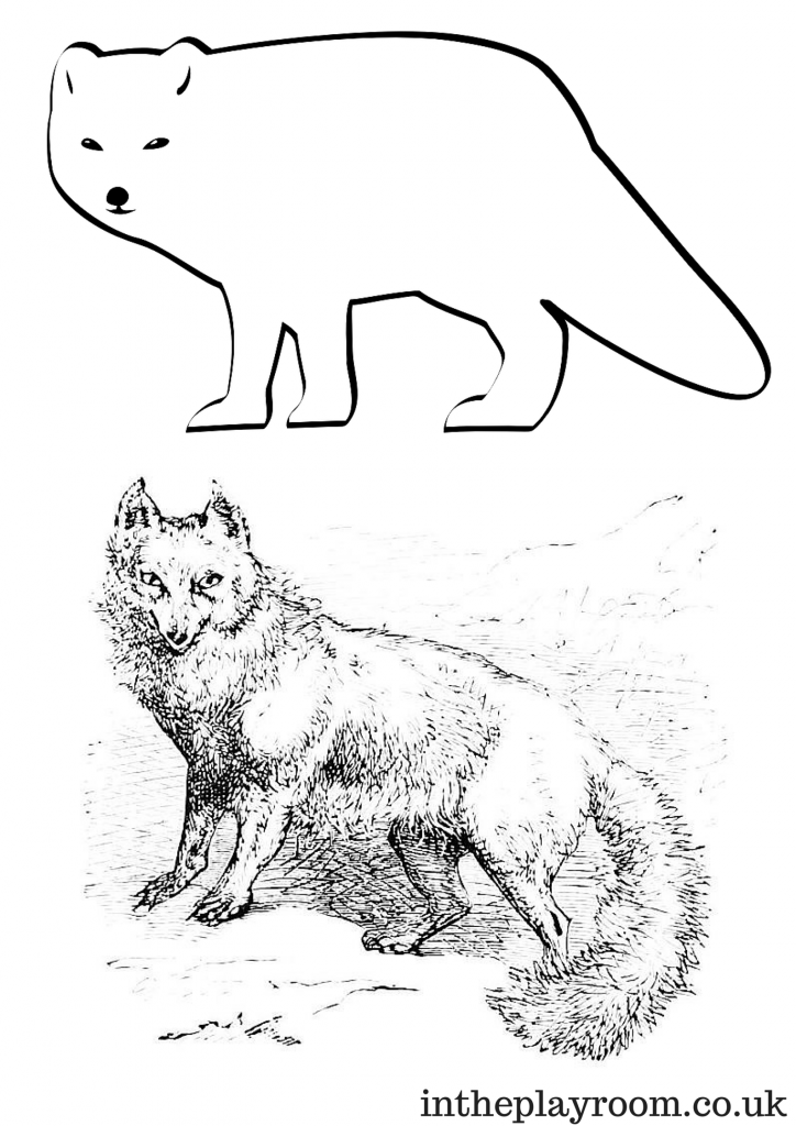 coloring pages of arctic animals - photo#14