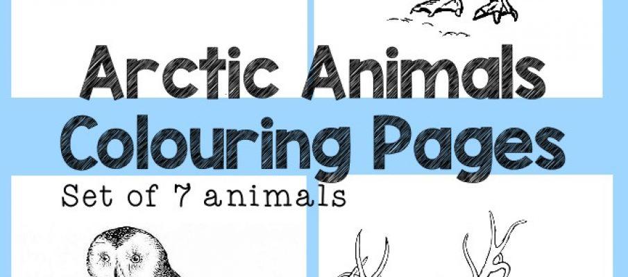 ArcticAnimalsColouring