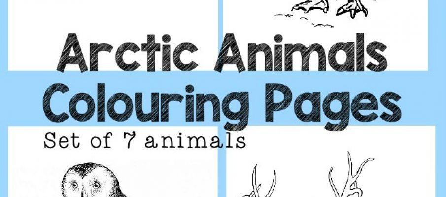 arctic-animals-cropped