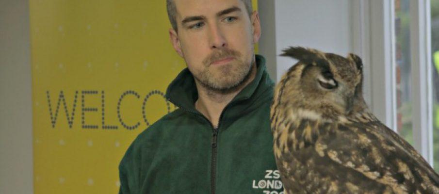 ee-robin-owl