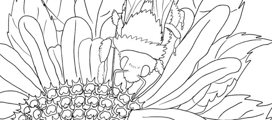 landscape-colouring-book-for-kids-page-003