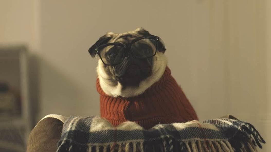 Behind the Scenes of 'A Pug's Christmas'