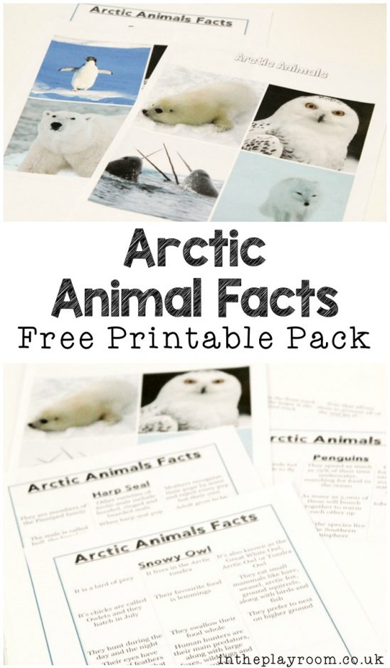 Polar Animals Fact Sheets and Games to Play with Them
