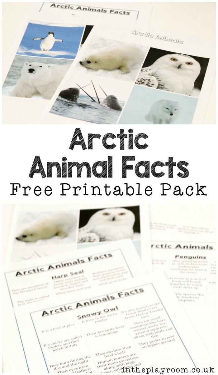 Arctic-Animal-Pack