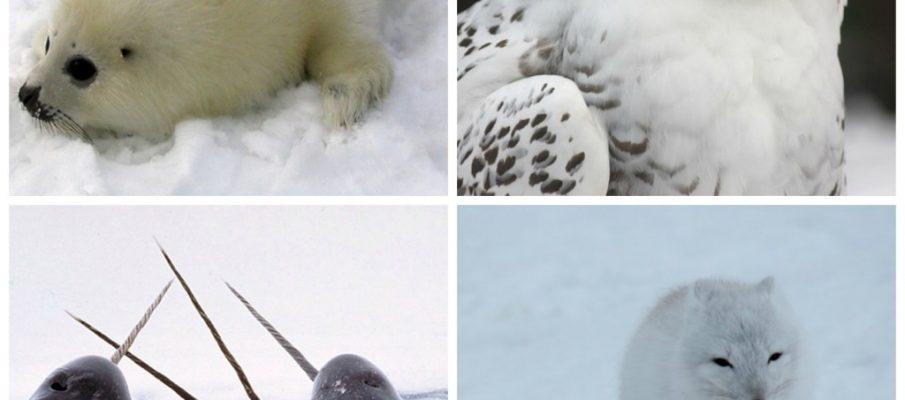 Arctic-Animals-Set1