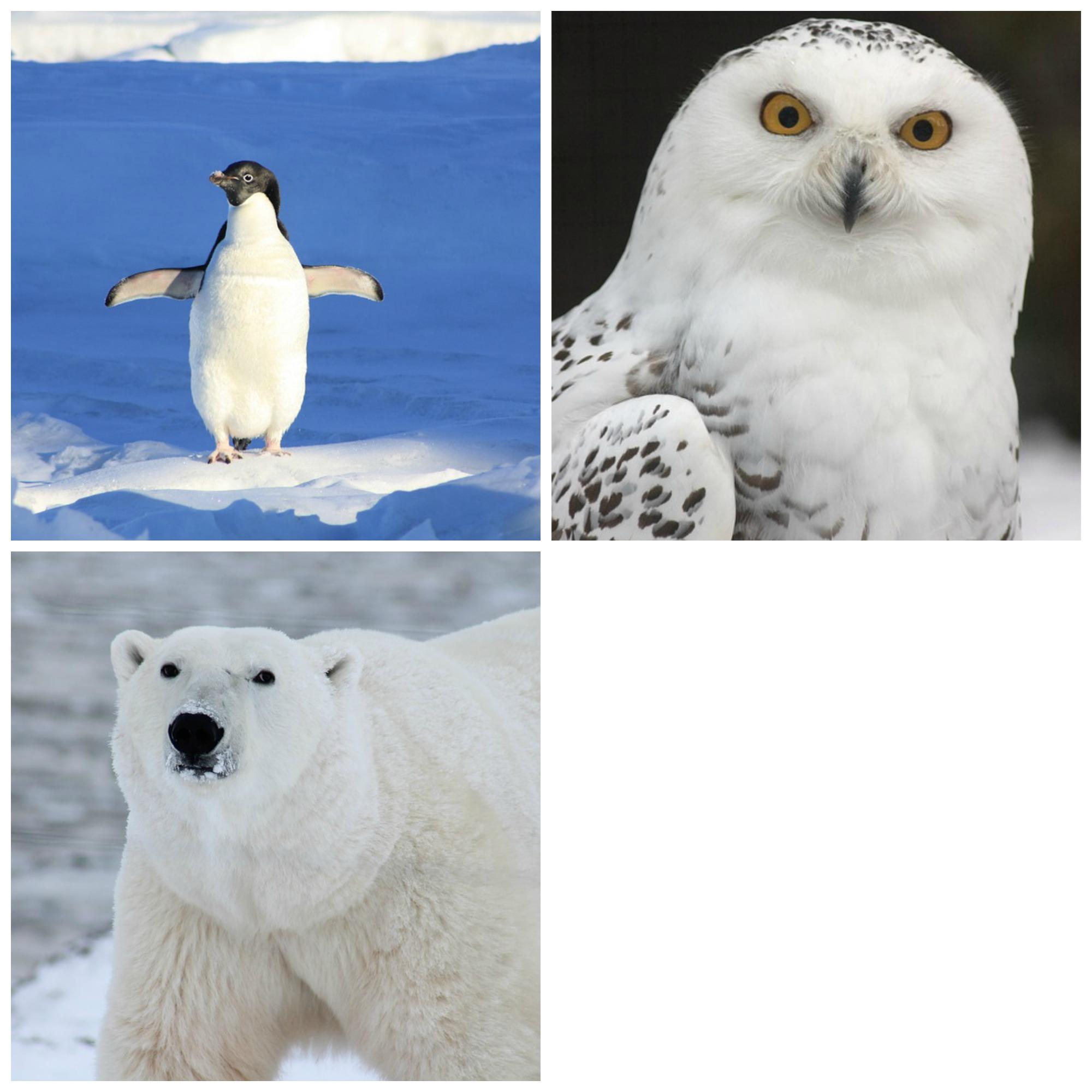 Arctic-Animals-Set2