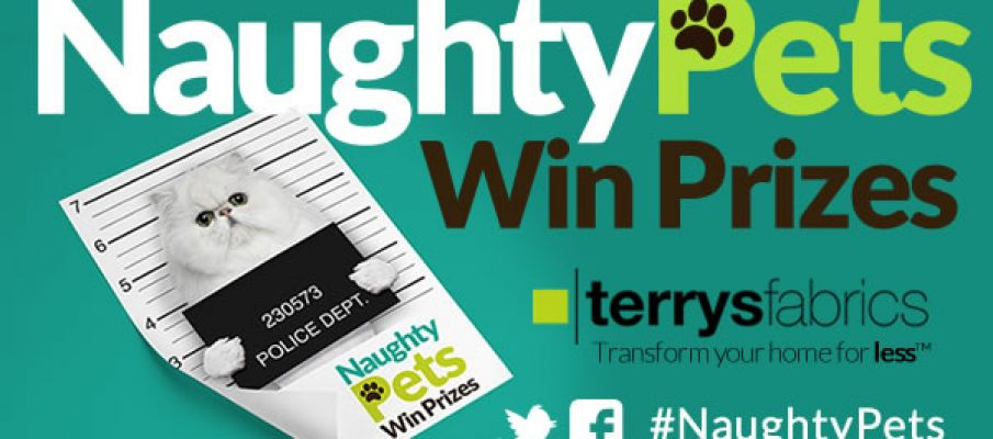 Terrys-naughty-pets-CAT