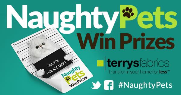 Naughty Pets Win Prizes