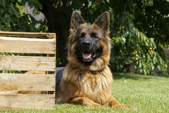 How to Provide a Healthy Diet and Lifestyle for Your Dog