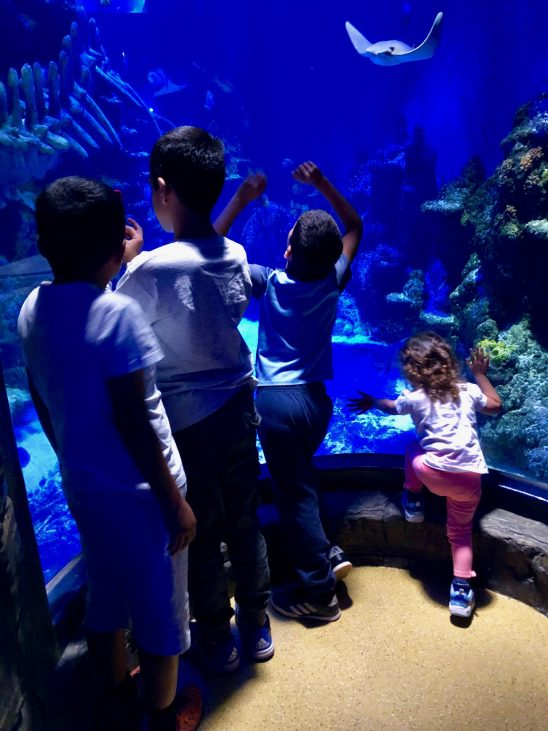 Visit to SEA LIFE London