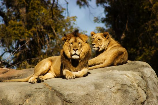 Top tips when visiting London Zoo with the kids